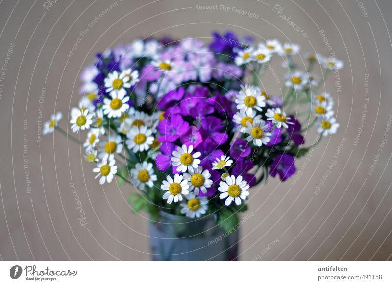 Toni's Strauß schön weiß Pflanze Blume Blatt gelb Innenarchitektur Blüte Glück Feste & Feiern Wohnung Häusliches Leben Glas Geburtstag Dekoration & Verzierung
