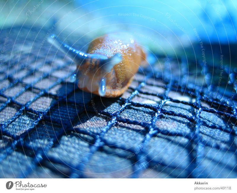 Blue Slug Hour blau Herbst Netz Schnecke Nacktschnecken