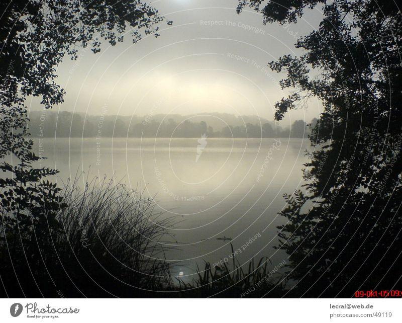 Ein Tag am See Traurigkeit See Zufriedenheit Nebel harmonisch Gott perfekt Götter Stimmungsbild Baggersee