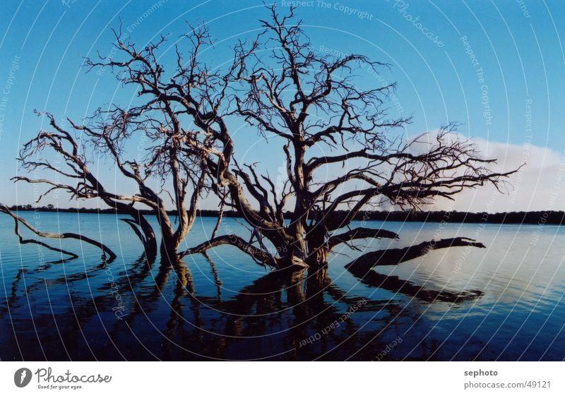 Toter See Himmel Baum blau ruhig dunkel Tod See Spiegel Glätte flach