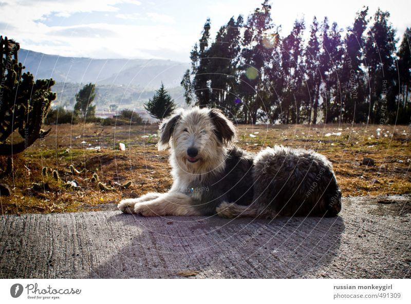 flauschiger Hund Tourismus Sommer Berge u. Gebirge Natur Tier Haustier 1 Abenteuer Leichtigkeit Farbfoto Außenaufnahme Menschenleer Textfreiraum oben Tag