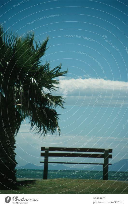 Palme und Bank am Meer Himmel Sommer Strand Ferien & Urlaub & Reisen Afrika