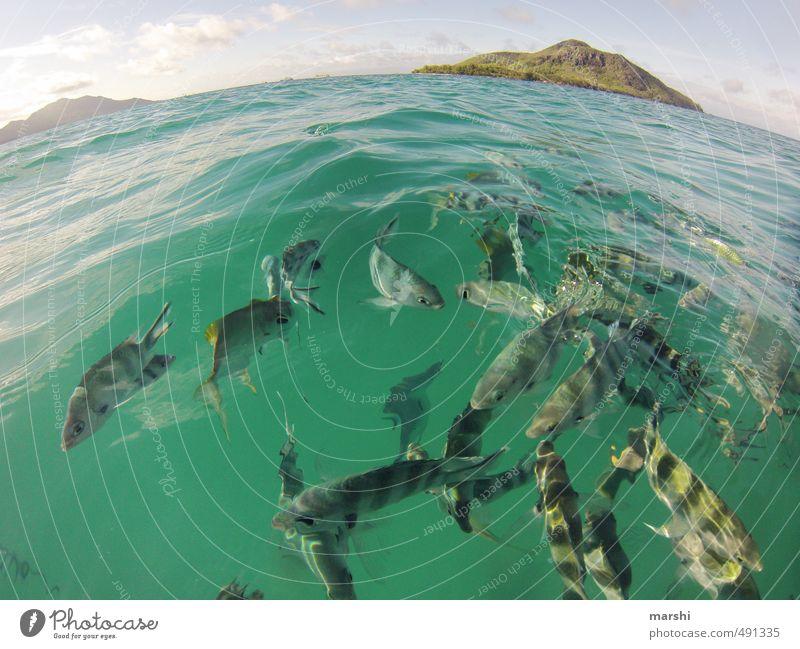 alles dreht sich im Kreis Wassersport Umwelt Natur Landschaft Pflanze Tier Erde Himmel Sommer Küste Korallenriff Insel Fisch Tiergruppe Schwarm Gefühle rund
