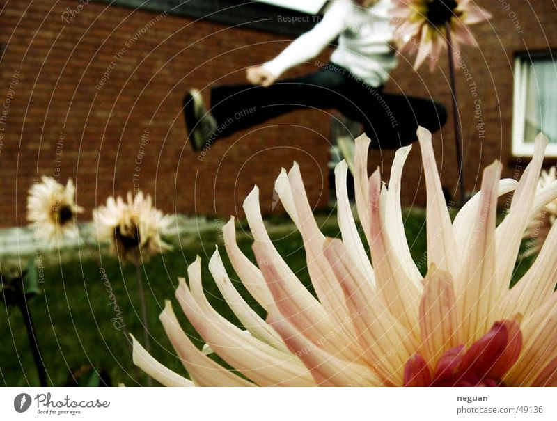 kung fu flowers fliegen