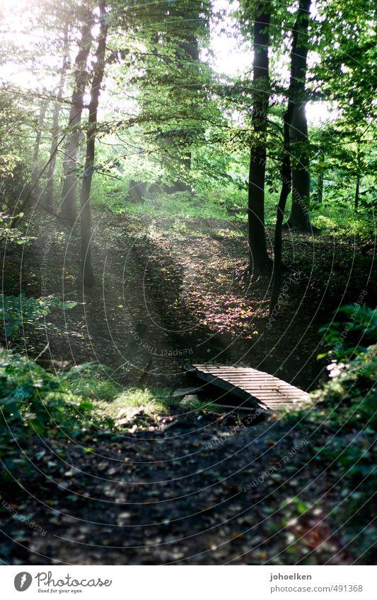 Die Antwort auf die Frage... Natur Sonnenlicht Wetter Schönes Wetter Baum Wald Brücke Holz leuchten wandern ästhetisch schön Kitsch natürlich Wärme braun gold
