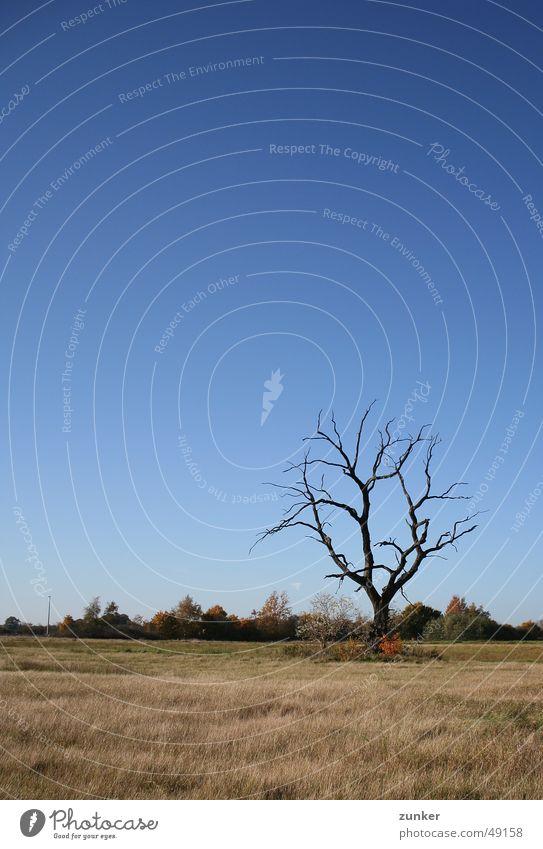 Skelett Baum Herbst Gras Tod Himmel Zweig Ast Landschaft blau