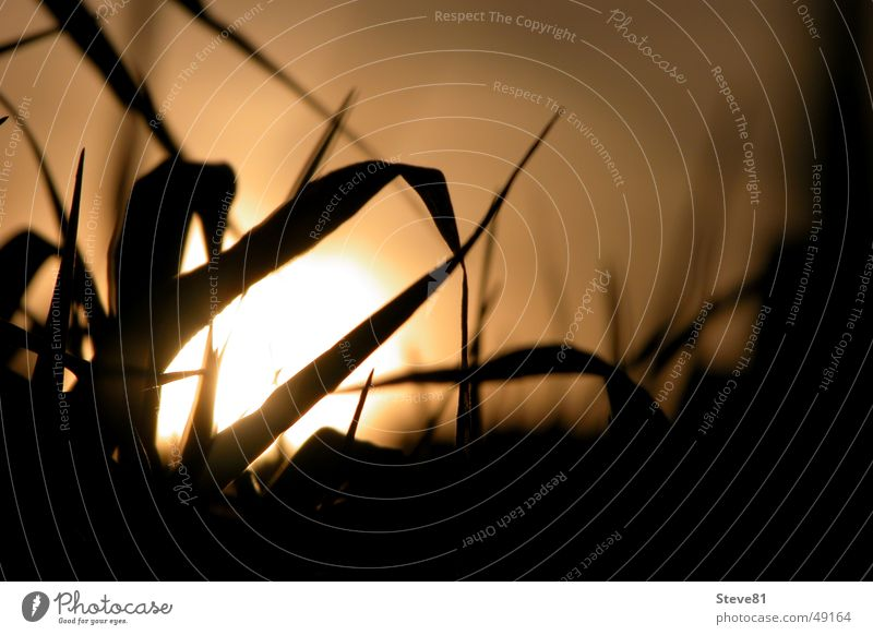 Feld hinter dem Hof 2 Gras Sonnenuntergang Stimmung Makroaufnahme