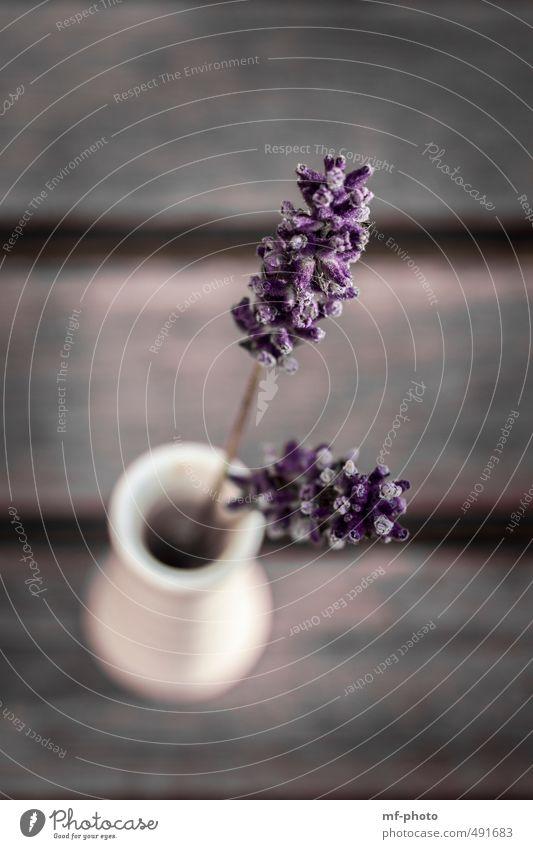Lavendel Pflanze ruhig grau braun Wohnung Lifestyle Design Wellness violett Lavendel Spa