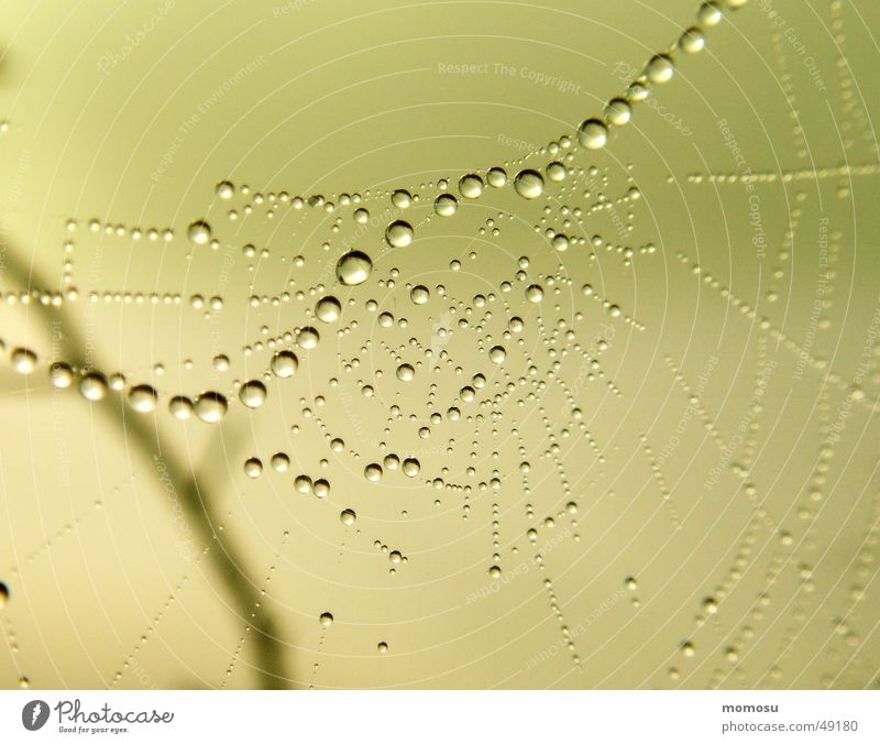 network Spinnennetz Herbst Seil Wassertropfen Netz