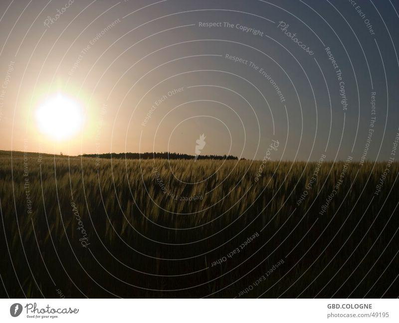 """""""Sundown"""" Erholung Ferien & Urlaub & Reisen Freiheit Sonne Natur Himmel Horizont Feld Unendlichkeit natürlich schwarz Sonnenuntergang Abenddämmerung Kornfeld"""