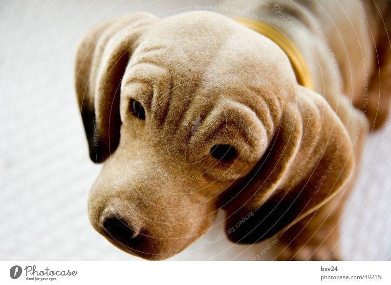 dackel Tier Hund braun süß Dackel