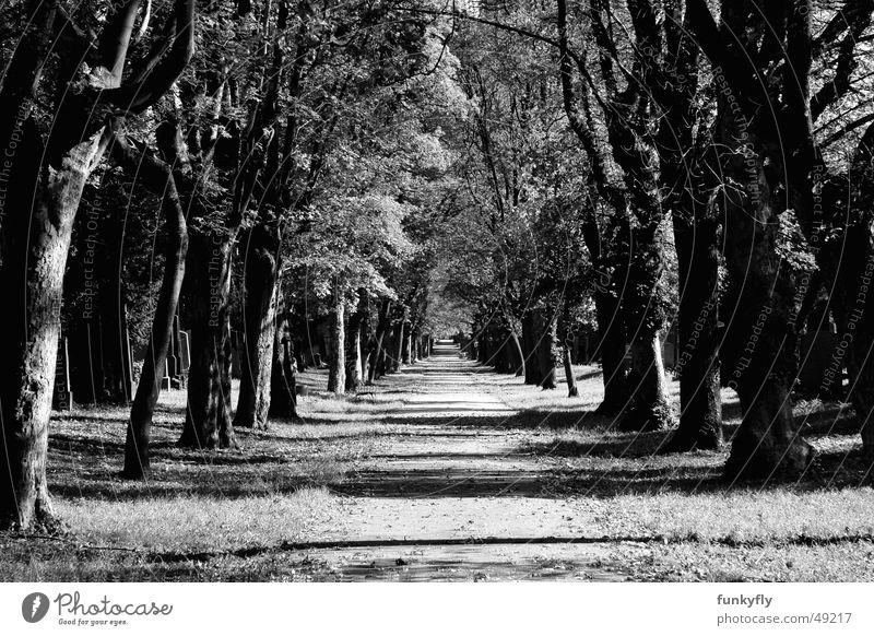 Heaven straight ahead Allee Tunnel Park black white Schwarzweißfoto 20d cemetery graveyard mystery mysterious autumn fallen spooky trees eternity road
