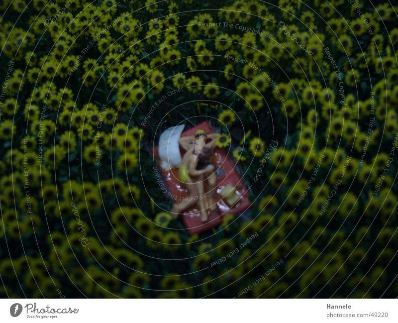 mitten im feld Feld Sommer Spielzeug gemütlich Romantik Zärtlichkeiten Mann Frau Picknick Wiese sonneblume Landschaft Liebe Paar Freude Liebespaar Zusammensein