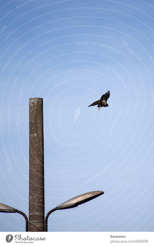 freiflug. Himmel blau Sonne Einsamkeit Tier Ferne Wege & Pfade Freiheit grau Metall träumen Vogel fliegen Kraft leuchten Energiewirtschaft