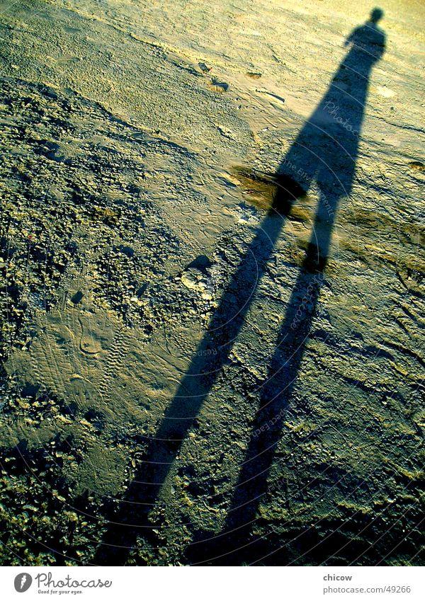 My Shadow Tanzfläche