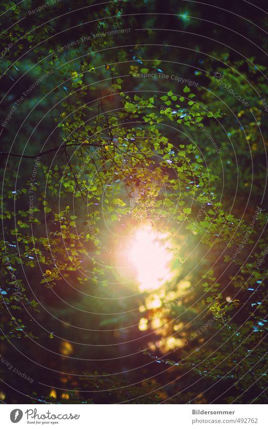 in all things Natur grün Pflanze Sommer Sonne Baum Erholung ruhig Blatt Wald Tod Herbst Stimmung Luft Zufriedenheit Schönes Wetter
