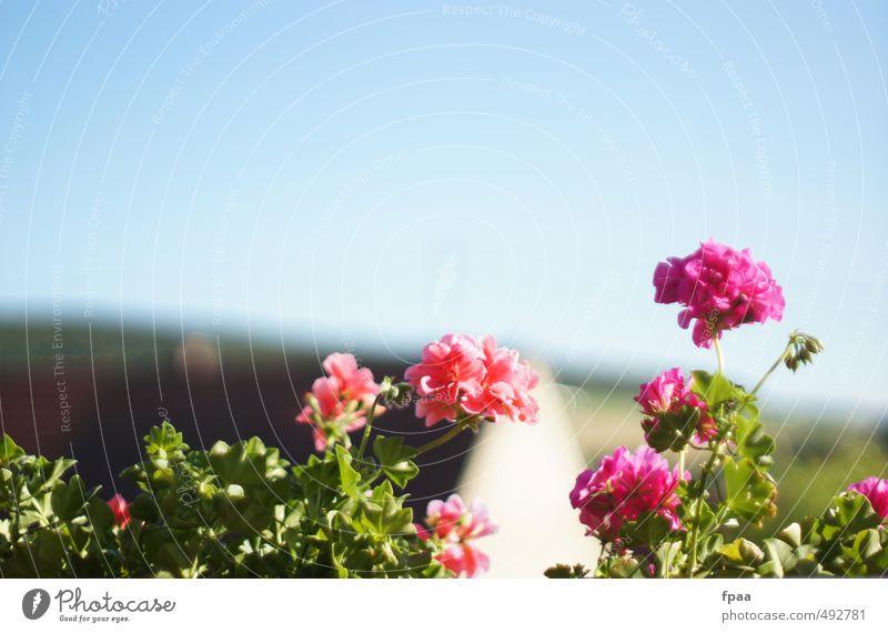 Balkonpanorama schön Sommer Sonne Garten Umwelt Natur Landschaft Pflanze Tier Urelemente Luft Himmel Wolkenloser Himmel Sonnenlicht Schönes Wetter Blume