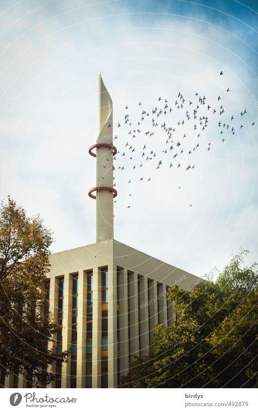 Zentralmoschee Köln Architektur Kultur Wolken Baum Köln-Ehrenfeld Moschee Minarett Taube Schwarm fliegen ästhetisch authentisch exotisch modern Originalität