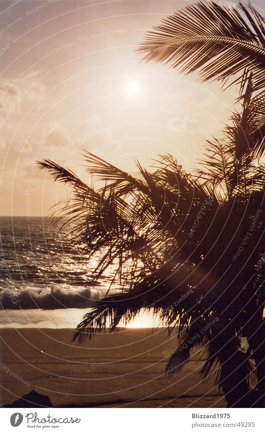 Blick gen Westen Sonnenuntergang Palme Strand Ferien & Urlaub & Reisen Meer Romantik