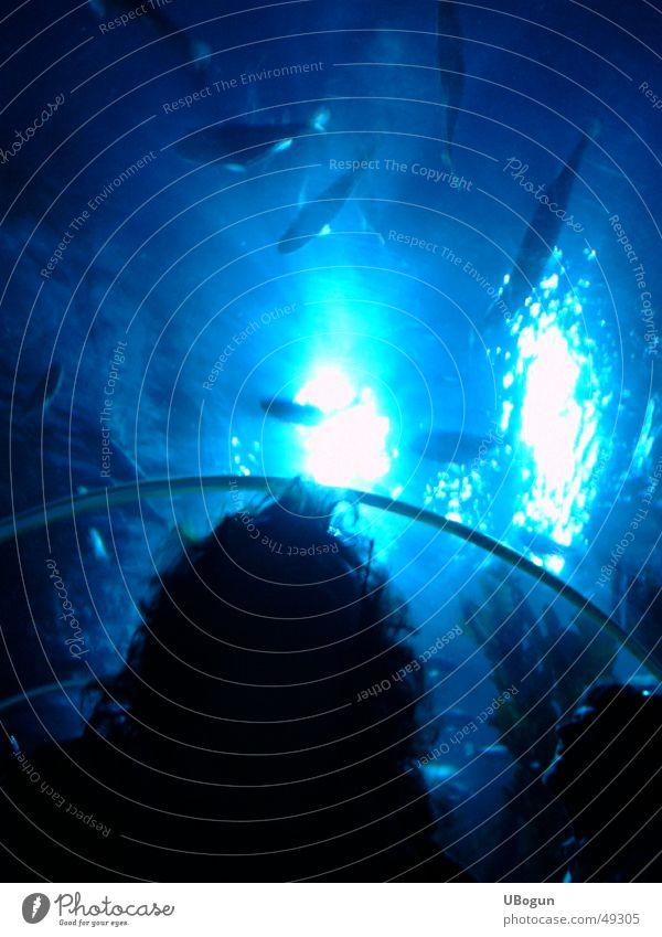 Blaues großes Aquarium blau ruhig Denken Fisch Aquarium Frauenkopf Meeresstimmung ungeblitzt