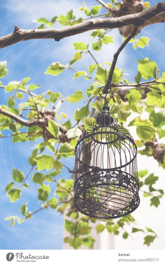 Get me out of the cage Umwelt Natur Pflanze Himmel Wolken Sonnenlicht Sommer Schönes Wetter Wärme Baum Blatt Ast Zweig Garten Park Käfig Vogelkäfig Windlicht