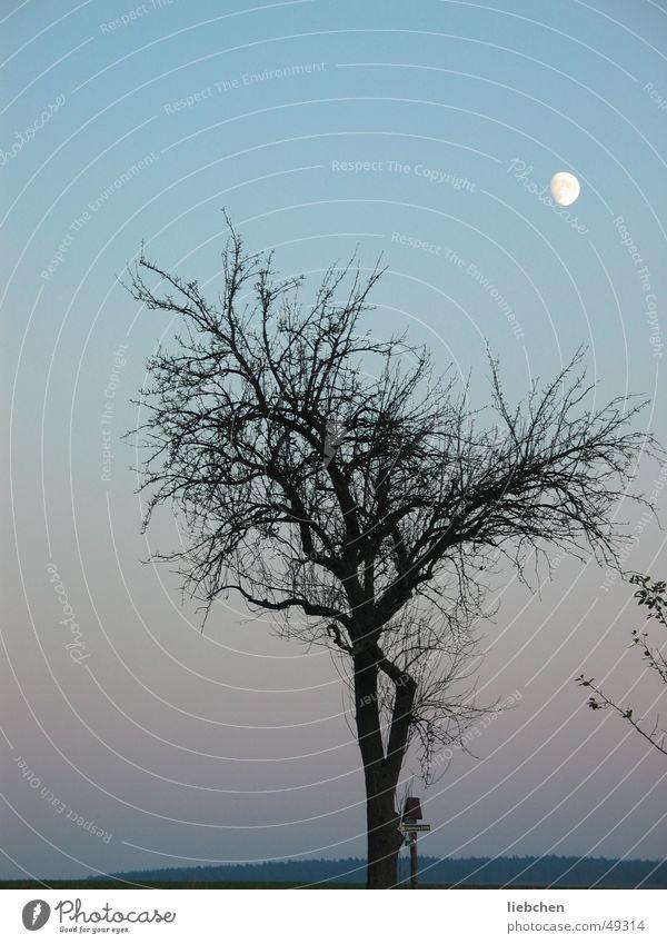 Mondsichtig Himmel Baum