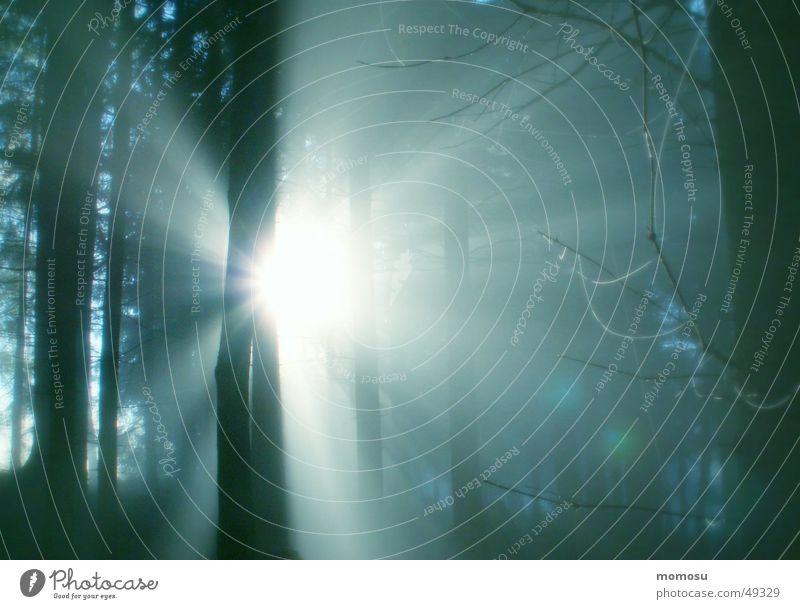 Durchbruch Wald Nebel Licht mystisch Tanne Herbst Landschaft Sonne Lichterscheinung Beleuchtung