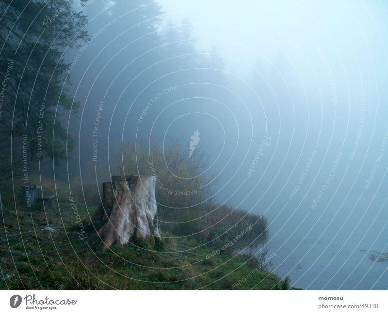 blauer Nebel Wasser Baum Wald Herbst See Stimmung Küste Baumstamm Baumstumpf