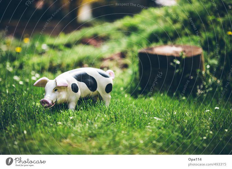 """Schwein gehabt Umwelt Natur Landschaft Pflanze Tier Gras Grünpflanze Garten Wiese beobachten warten grün Einsamkeit einzigartig """"Garten Hausschwein Dekoration"""