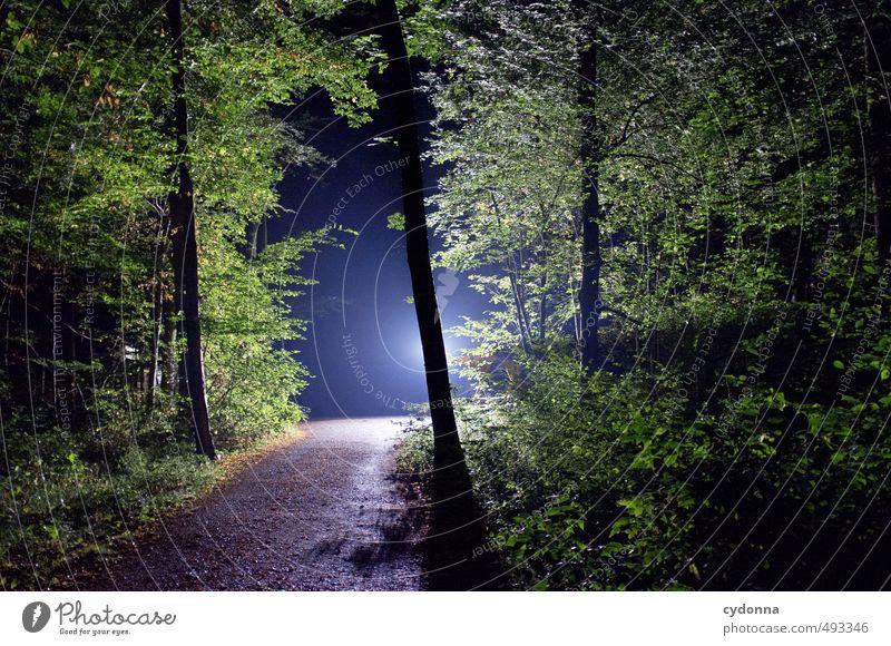 Nachtsicht Natur Sommer Landschaft Blume Wald dunkel Umwelt Wege & Pfade Religion & Glaube träumen Kraft Idylle wandern bedrohlich Abenteuer einzigartig