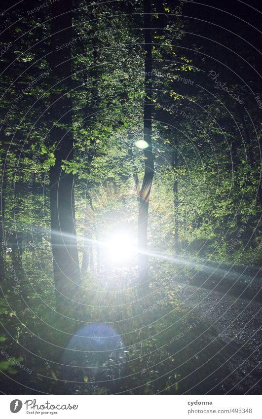 Lichterscheinung ruhig Abenteuer wandern Umwelt Natur Landschaft Sommer Baum Wald einzigartig Energie entdecken Erwartung geheimnisvoll Glaube Religion & Glaube