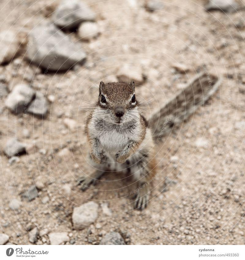 Haste mal ne Nuss? Natur ruhig Tier Leben Freundschaft Erde Zufriedenheit Wildtier stehen Kommunizieren niedlich einzigartig Pause Hoffnung planen Neugier