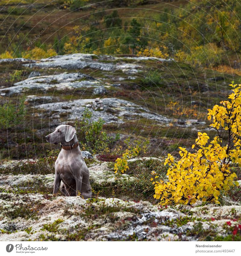 Aufmerksam Hund ruhig Wald Berge u. Gebirge Leben Herbst Felsen elegant wandern ästhetisch beobachten Fitness Gelassenheit Konzentration Leidenschaft