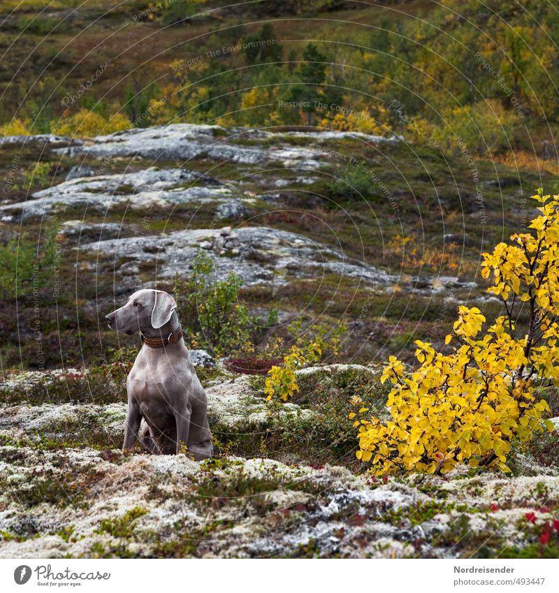 Aufmerksam Hund ruhig Wald Berge u. Gebirge Leben Herbst Felsen elegant wandern ästhetisch beobachten Fitness Gelassenheit Konzentration Leidenschaft Wachsamkeit