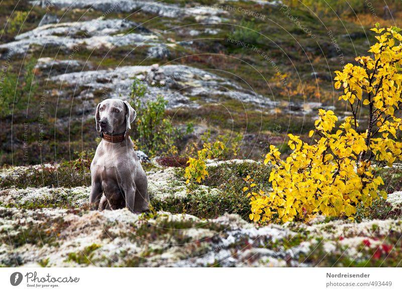 Unterwegs Hund Natur Pflanze Baum Landschaft Tier Berge u. Gebirge Herbst Gras Felsen wandern sitzen warten Ausflug Klima Abenteuer