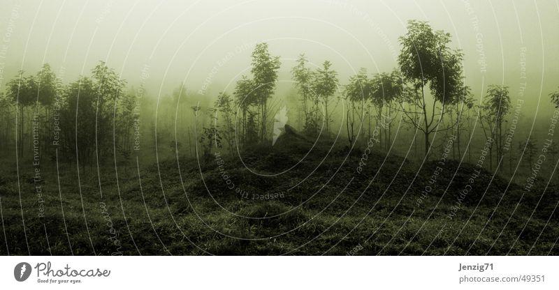 Morgennebel. Baum dunkel Herbst Wiese Gras Nebel