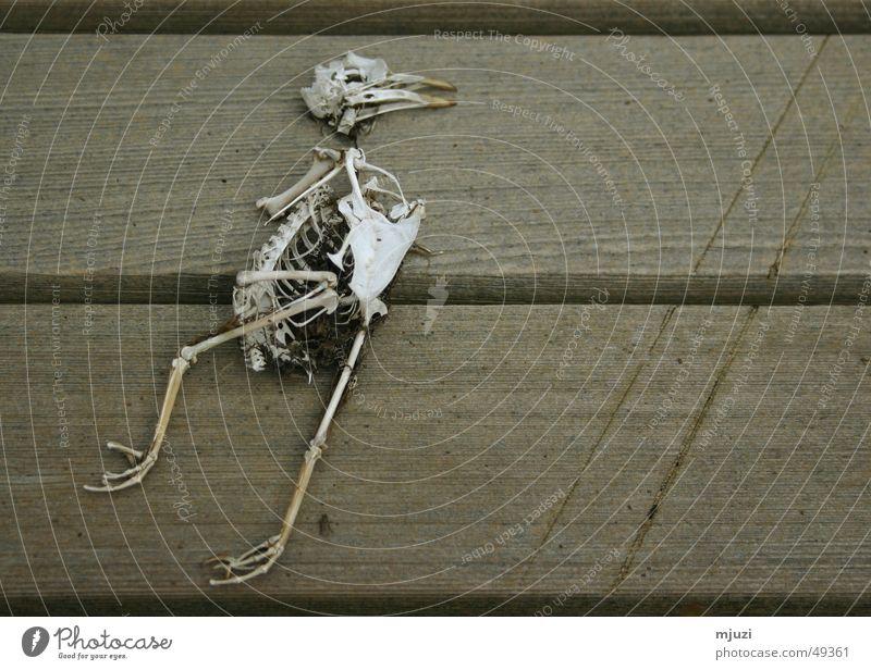 unvergänglich Vogel Skelett Tod trist zuende sterbliche überbleibsel das leben nach dem tod nie wieder fliegen ruhe in frieden Ende verrenken grau in grau