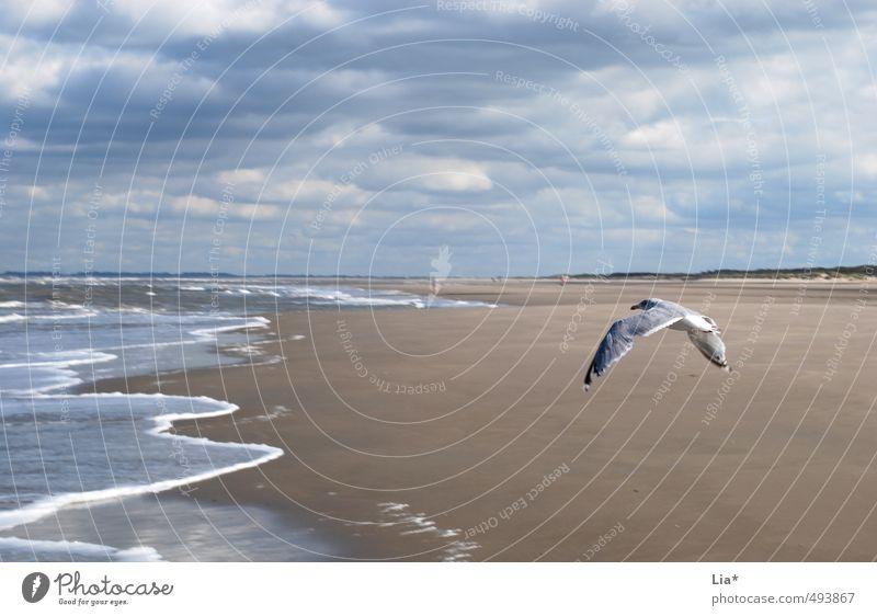 Möwe fliegt am Strand Sand Wasser Himmel Wolken Wellen Nordsee Meer Tier Vogel Flügel 1 fliegen frei blau ruhig Erholung Freiheit Ferne Sandstrand Farbfoto