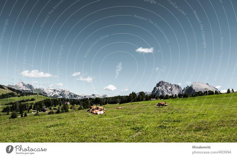 Tier | Qüe, was sonst? Umwelt Natur Landschaft Himmel Wolken Sommer Gras Wiese Wald Hügel Felsen Alpen Berge u. Gebirge Gipfel Alm Seiser Alm Kuh Tiergruppe