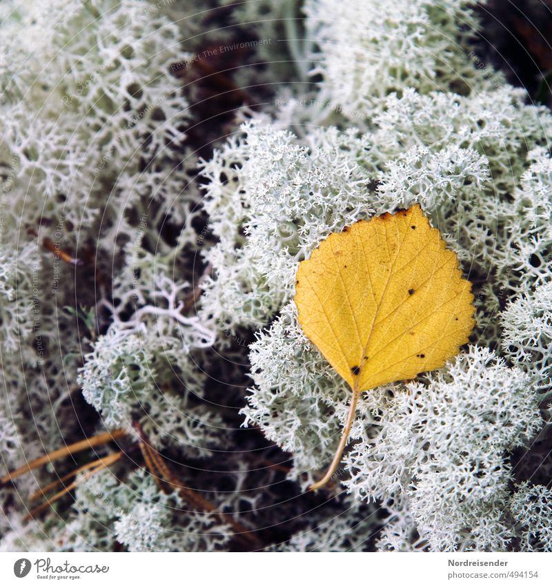 Schwedenherbst Natur Pflanze Herbst Moos Blatt Wildpflanze Wald alt dehydrieren authentisch Senior Einsamkeit Stimmung Vergänglichkeit verlieren