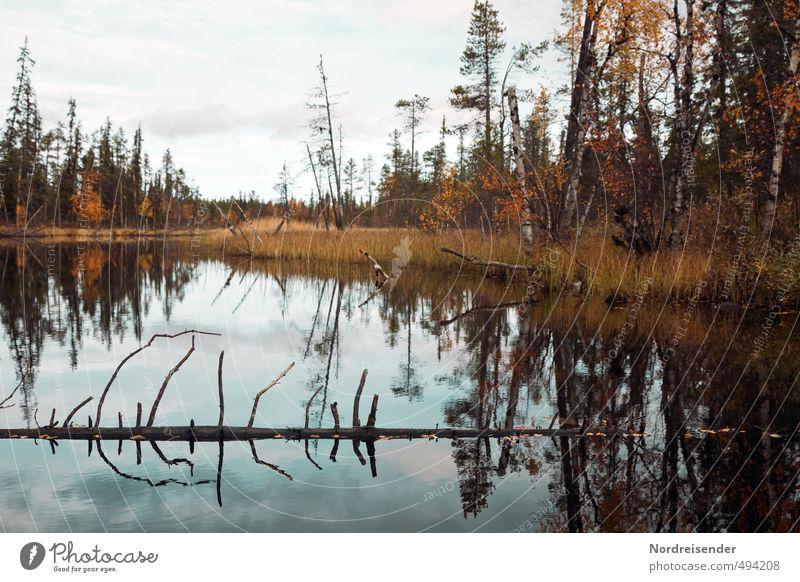 Wildnis Natur Wasser Farbe Pflanze Einsamkeit Landschaft ruhig Wald dunkel Herbst See natürlich wandern Urelemente Abenteuer Vergänglichkeit