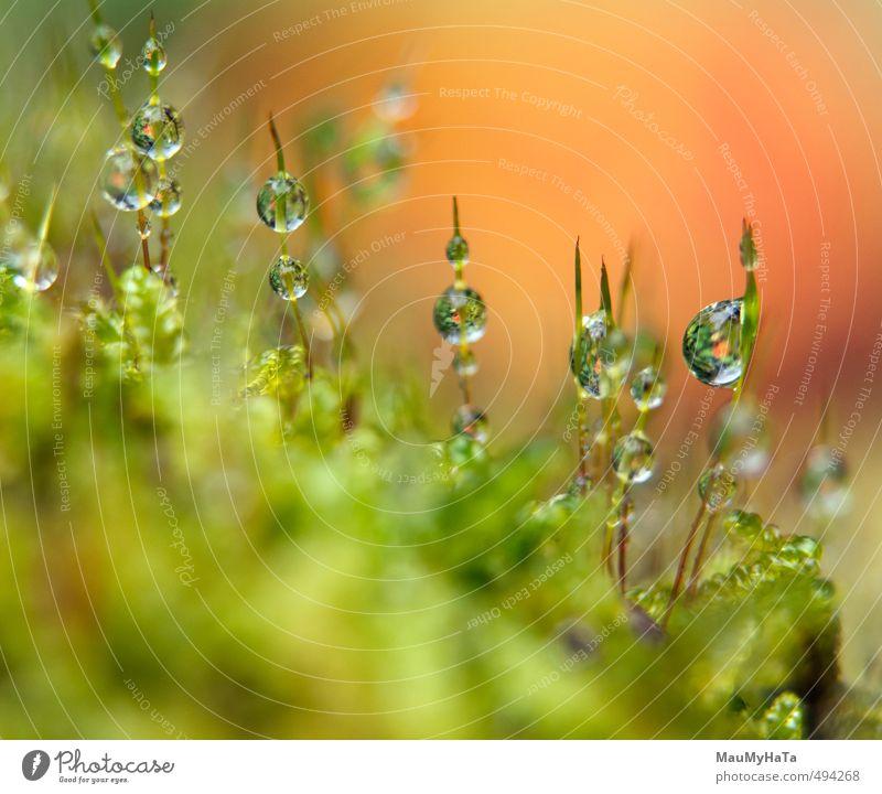 Wassertropfen im Moos Natur Pflanze Regen Wald Tropfen Wachstum frisch nass grün Reinheit Abenteuer chaotisch Berlin - Deutschland Wasserkörper Regentropfen