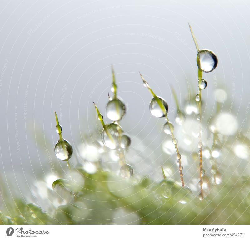 Wassertropfen im Moos Natur Pflanze Urelemente Herbst Klima schlechtes Wetter Regen Garten Wald Tropfen Wachstum frisch nass grün silber weiß Reinheit Angst