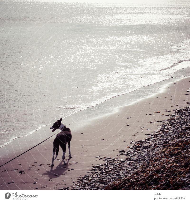 Hund Natur Wasser Meer ruhig Freude Tier Umwelt Küste natürlich Gesundheit Wellen Zufriedenheit laufen warten frisch