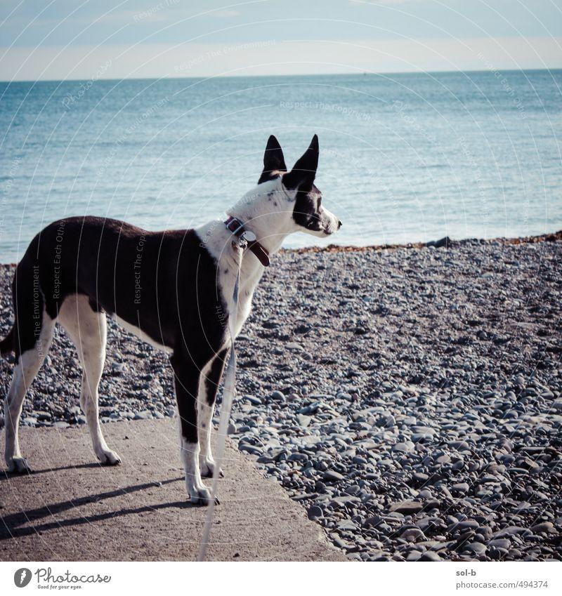 Killiney Beach Umwelt Natur Wasser Himmel Schönes Wetter Küste Meer Tier Haustier Hund Windhund 1 beobachten hören frisch Gesundheit natürlich Tierliebe Treue