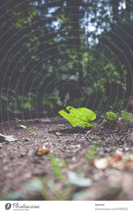 Berühre den Boden Umwelt Natur Pflanze Erde Sonne Sonnenlicht Sommer Herbst Schönes Wetter Baum Blatt Grünpflanze Wald Wege & Pfade leuchten hell grün unten