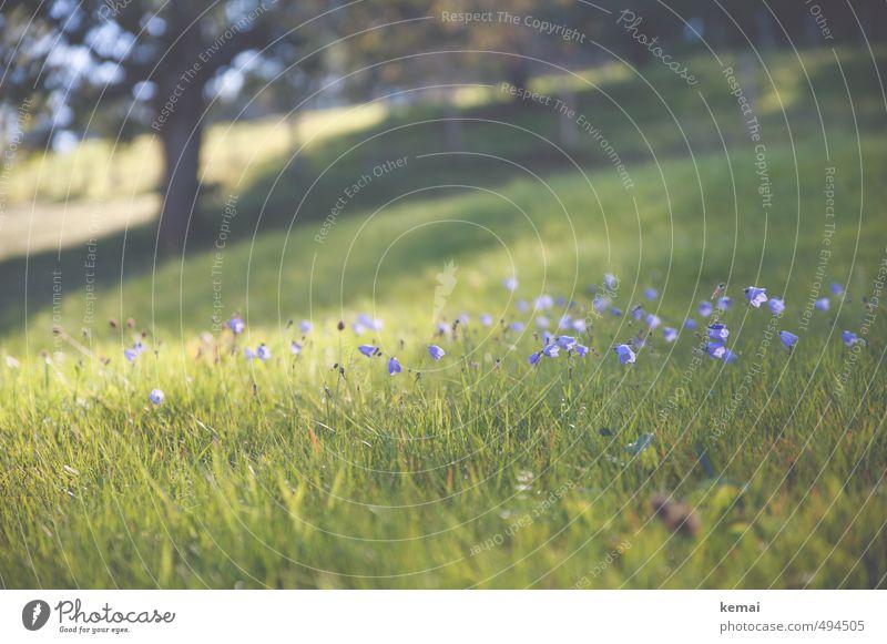 Zurückdenken, durchatmen Umwelt Natur Landschaft Pflanze Sommer Herbst Schönes Wetter Wärme Baum Blume Gras Blüte Grünpflanze Wildpflanze Wiese Blühend Wachstum