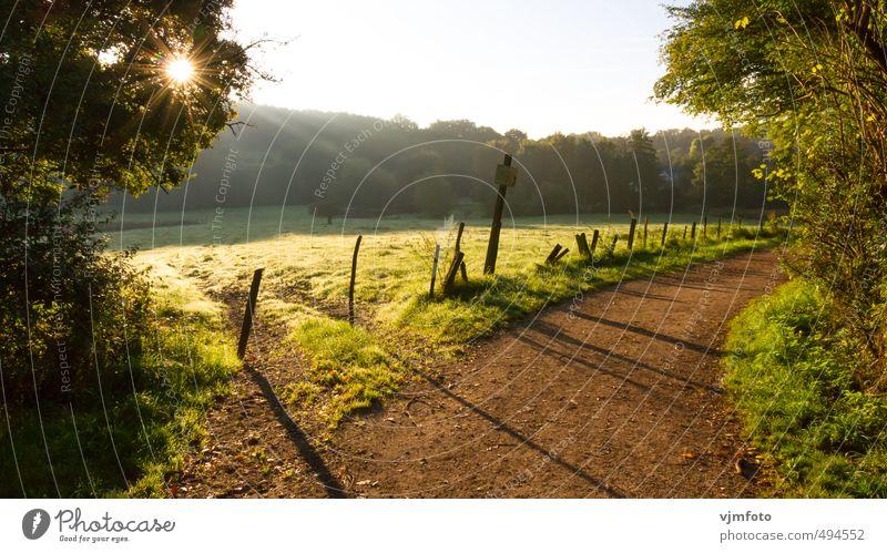 Herbstliche Sonnenstrahlen Himmel Natur grün Pflanze Baum Landschaft Wald Wiese Gras Wege & Pfade braun Freizeit & Hobby Erde wandern