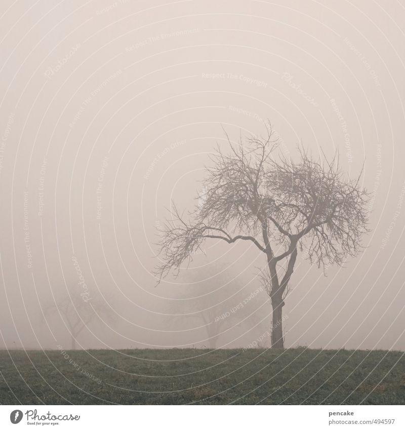 schleierhaft Natur Landschaft Herbst Nebel Baum Gras Feld Zeichen nackt nass grün rosa Nebelstimmung Geäst Allgäu Streuobstwiese Weide 3 Farbfoto