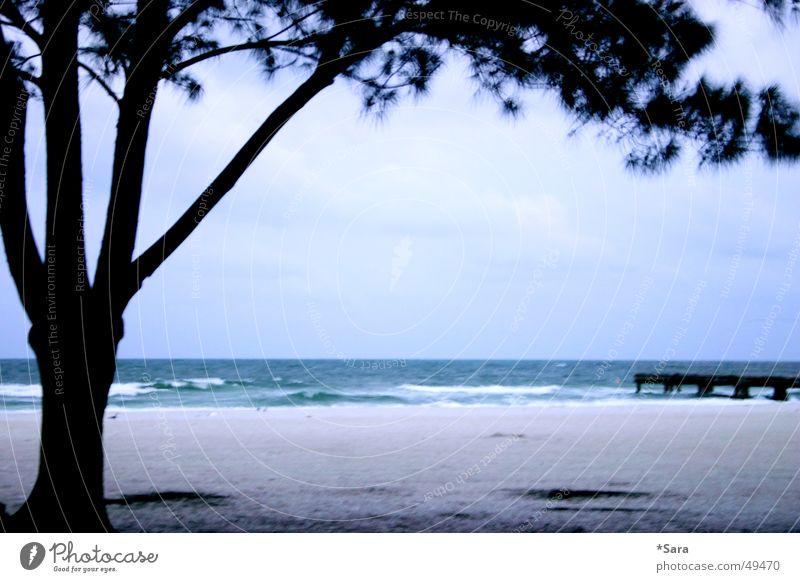 Strand Meer Baum Amerika blau Wasser Sand Silhouette Brandung Sandstrand Menschenleer Zweige u. Äste Steg Ferne Wellen Textfreiraum Mitte
